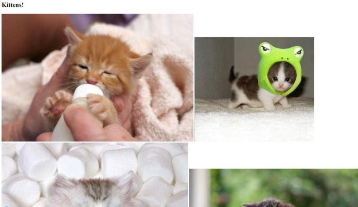 kittenspage